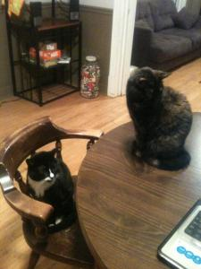 """See?  As soon as I stop typing, they're all, """"What?  We didn't want to hang out on the computer.  Leave us alone."""""""